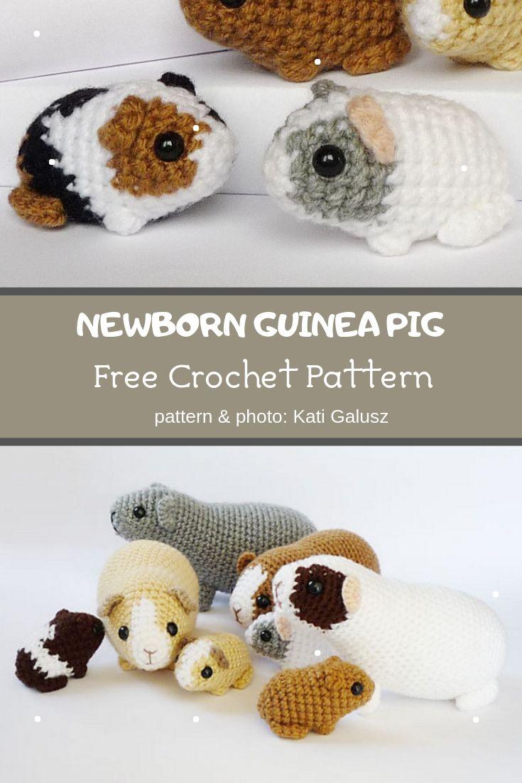 newborn guinea pig